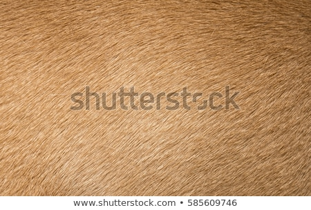 brown dog fur texture Stock photo © sfinks