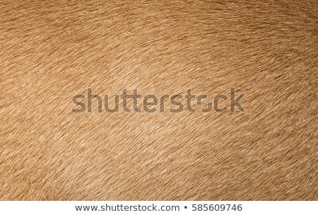 bruine · hond · bont · textuur · natuur · ontwerp · achtergrond - stockfoto © sfinks