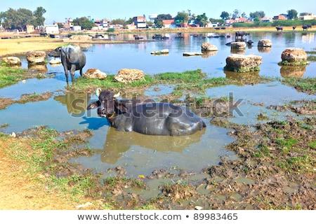 vache · boueux · eau · herbe · paysage · arbres - photo stock © meinzahn