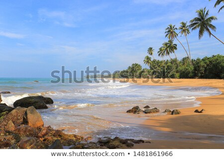 Wild tropical beach Stock photo © smithore