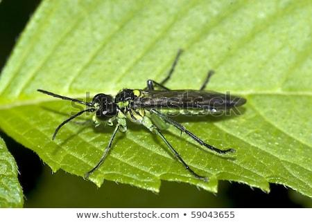 природы лет зеленый животного красивой насекомое Сток-фото © chris2766