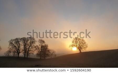 туманный утра Йоркшир Восход дерево солнце Сток-фото © chris2766