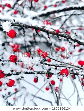 Neige horizontal nature beauté Photo stock © olykaynen