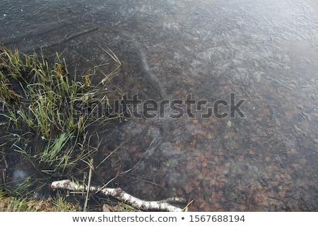 buz · dondurulmuş · nehir · su · yüzeyi · kış · sezonu · soyut - stok fotoğraf © stevanovicigor