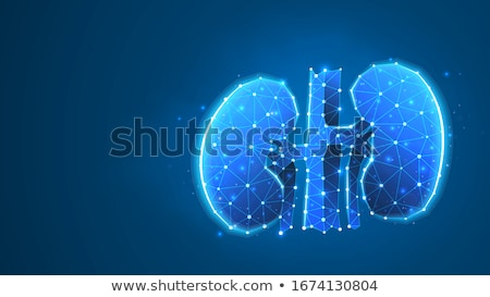 Stock photo: Kidneys abstract blue background