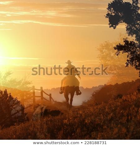 Férfi lóháton naplemente illusztráció természet ló Stock fotó © adrenalina