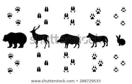 footprint deer  in the wood Stock photo © adrenalina