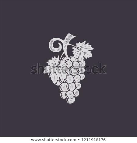 Vintage jand-drawn grape icon. Retro design. Friut symbol for logo, label or badge. Stock vector ill Stock photo © JeksonGraphics