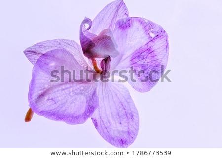 Orchidea fiore primavera floreale bokeh spazio Foto d'archivio © mythja