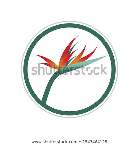 Aves paraíso flor marco plantilla ilustración Foto stock © colematt