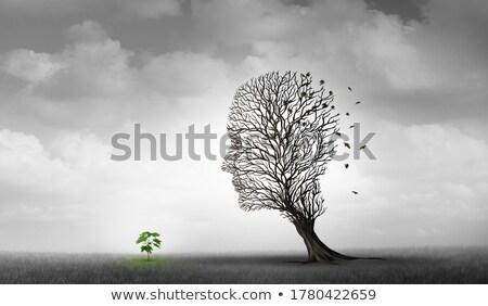 Planta passado futuro ilustração semente plântula Foto stock © lenm