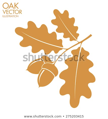 oak leaves and acorns stock photo © nekiy