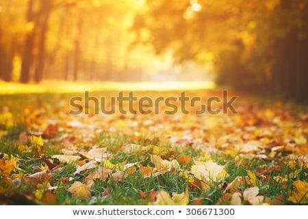 осень природы парка осень листьев деревья Сток-фото © Anneleven