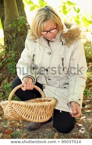 senior woman gathering hazelnuts Stock photo © photography33