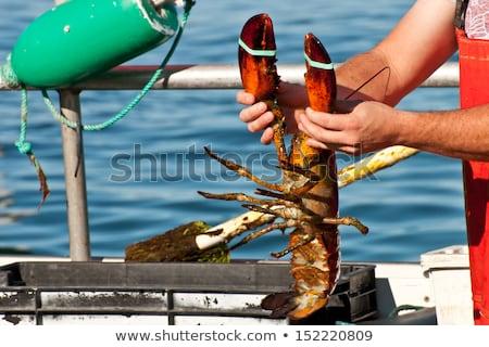fishermen hands working fish catch on boat deck Stock photo © lunamarina