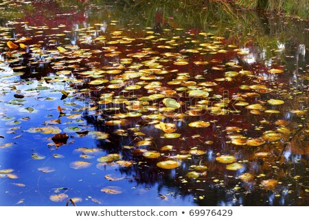 lily pad reflections abstract van dusen gardens vancouver stock photo © billperry