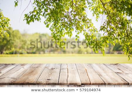 природного поверхность сушат текстуры древесины Сток-фото © andromeda