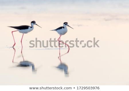エッジ 水 鳥 海岸 ストックフォト © pancaketom