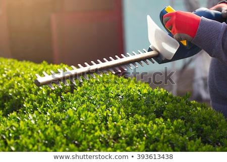 hedge trimmer Stock photo © kjpargeter