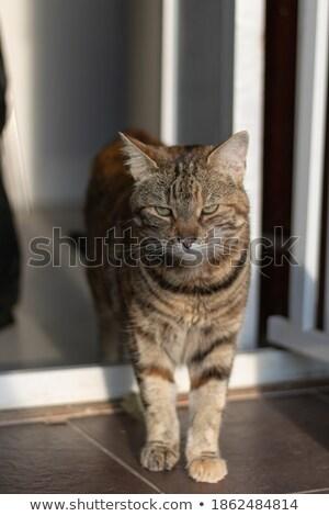 Stalking Tabby Kitten Stock photo © dnsphotography
