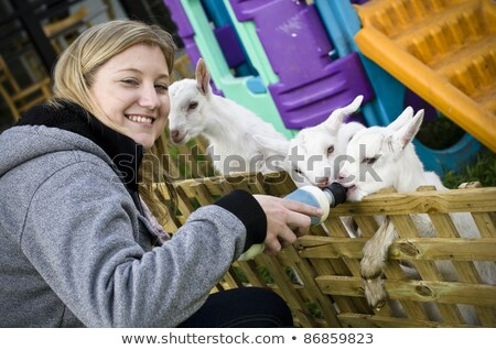 attractive young woman feeding baby goats stock photo © galitskaya