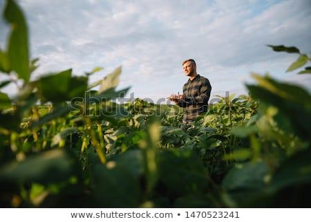 農家 栽培 フィールド 農業 調べる 品質 ストックフォト © simazoran