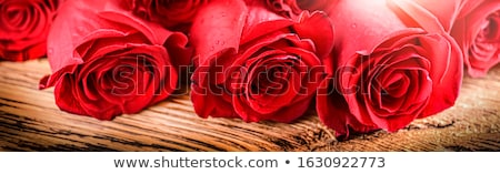 Wide web banner with roses Stock photo © neirfy