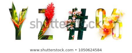 草 アルファベット 孤立した 白 コンピューターグラフィックス 自然 ストックフォト © RAStudio
