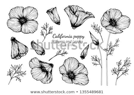カリフォルニア ケシ セット 黄色 花 ストックフォト © blackmoon979