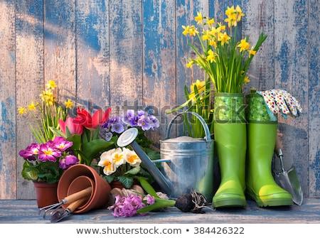 Tavasz hobbi kert szabad szöveg űr Stock fotó © grafvision