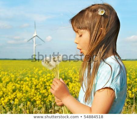 Paardebloem windmolen groene energie metafoor hemel bloem Stockfoto © lunamarina