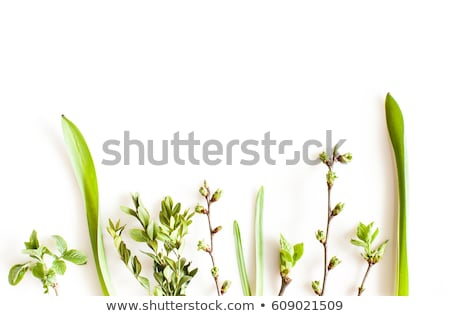 Over view of grass on white background 