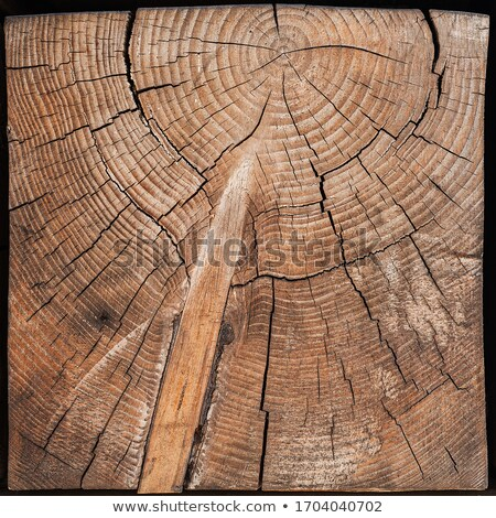 close up of stacked cut forest tree logs stock photo © latent