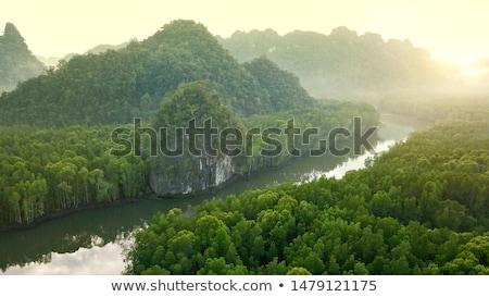 rainforest morning fog Stock photo © smithore