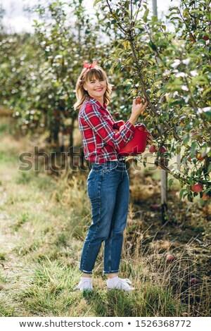 bos · vruchten · foto · shot · voedsel · natuur - stockfoto © photography33