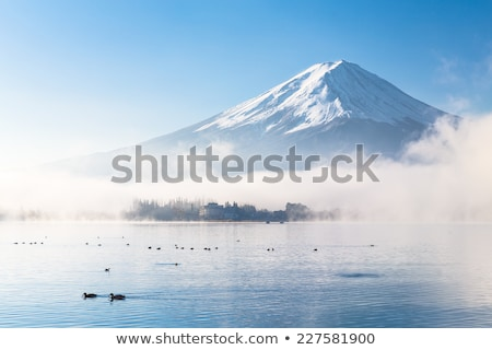 duck in Japanese winter Stock photo © yoshiyayo