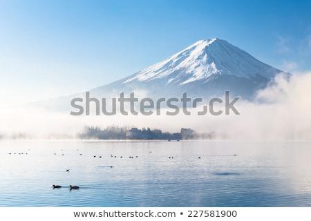 duck in japanese winter stock photo © yoshiyayo