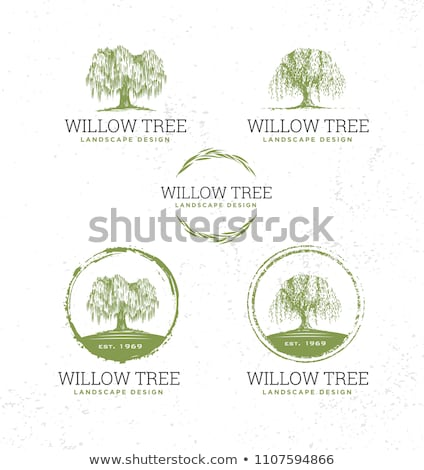 Wilg zomer blauwe hemel hemel natuur bomen Stockfoto © xedos45