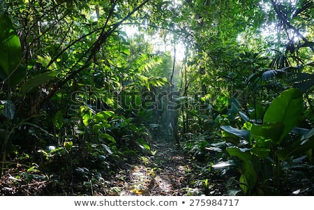 jungle footpath Stock photo © prill