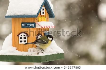 птица дома зима древесины природы безопасной Сток-фото © bigjohn36