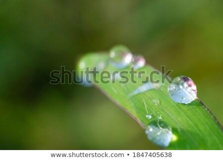 clear diamond in the green grass  Stock photo © jonnysek