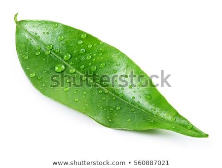 mandarijn · rijp · regen · druppels · boom · tuin - stockfoto © boroda