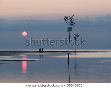 people walking in tidal flat Stock photo © meinzahn