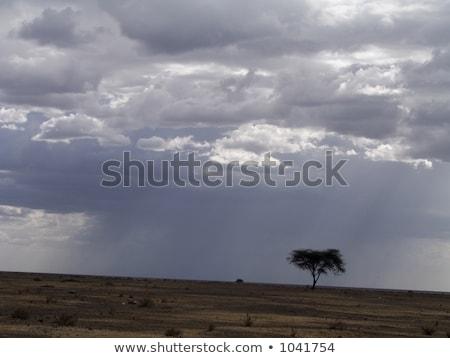 Güneş bulutlar parlak yağmur ağır muson Stok fotoğraf © backyardproductions