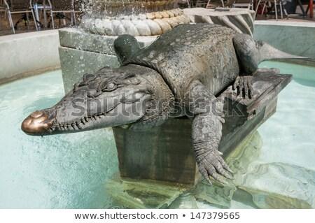 crocodilo · água · cabeça · natação · Austrália · natureza - foto stock © cynoclub