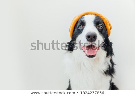 isolated puppy portrait stock photo © taviphoto