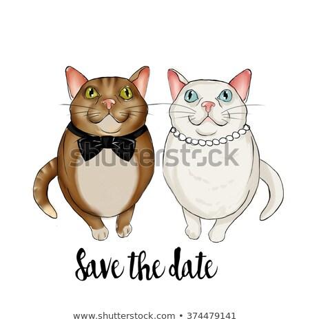 imádnivaló · pár · macskák · visel · menyasszonyi · kellékek - stock fotó © gigi_linquiet
