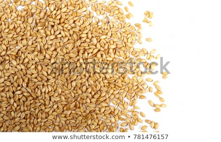 Handful of harvested wheat grains, top view Stock photo © stevanovicigor