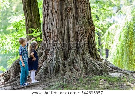 Lány játszik vmi mellett illusztráció erdő gyermek Stock fotó © bluering