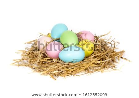 яйца гнезда пасхальное яйцо ярко Сток-фото © IS2